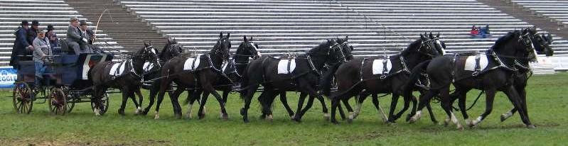 лошадей, по виду упряжи,